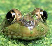 Button font size, color, font settings - frog165 column Blog Channel